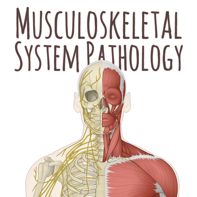 musculoskeletal system pathology review